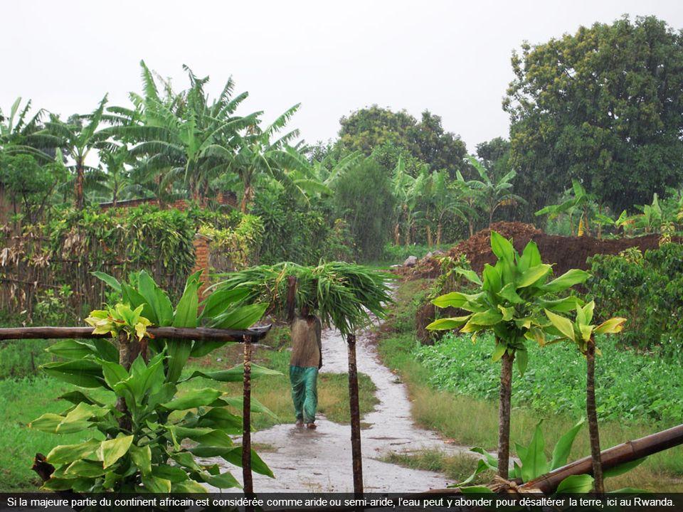 Si la majeure partie du continent africain est considérée comme aride ou semi-aride, leau peut y abonder pour désaltérer la terre, ici au Rwanda.