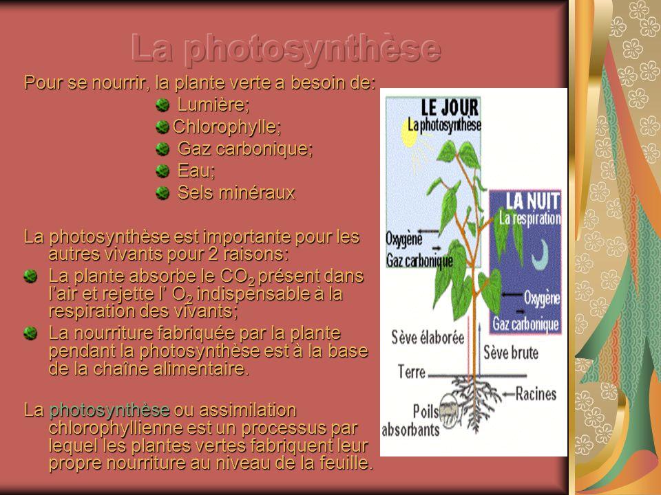 Pour se nourrir, la plante verte a besoin de: Lumière; Lumière;Chlorophylle; Gaz carbonique; Gaz carbonique; Eau; Eau; Sels minéraux Sels minéraux La