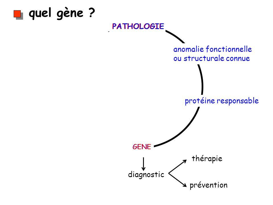 quel gène ? diagnostic thérapie prévention PATHOLOGIE GENE anomalie fonctionnelle ou structurale connue protéine responsable