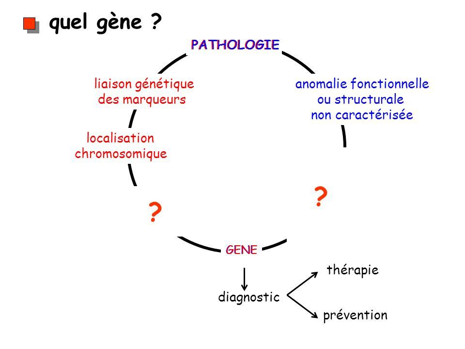 quel gène ? diagnostic thérapie prévention PATHOLOGIE GENE anomalie fonctionnelle ou structurale non caractérisée liaison génétique des marqueurs loca