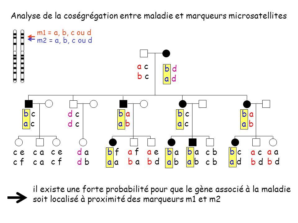 Analyse de la coségrégation entre maladie et marqueurs microsatellites il existe une forte probabilité pour que le gène associé à la maladie soit loca
