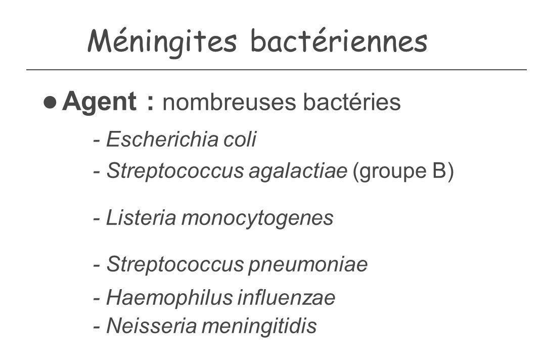 Méningites bactériennes Agent : nombreuses bactéries - Escherichia coli - Streptococcus agalactiae (groupe B) - Listeria monocytogenes - Streptococcus