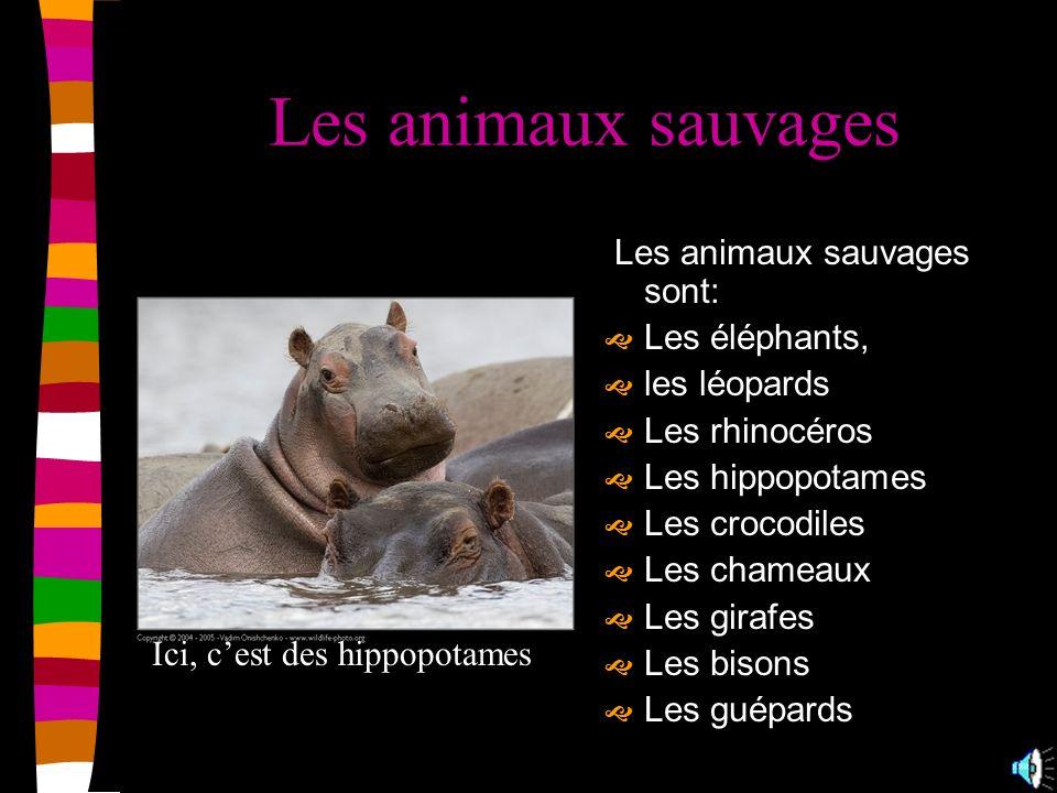 Les animaux romains Les animaux domestiques sont: Les chats Les mongoustes Les oiseaux Les singes Les reptiles Les poissons Les cervidés Les lions Les