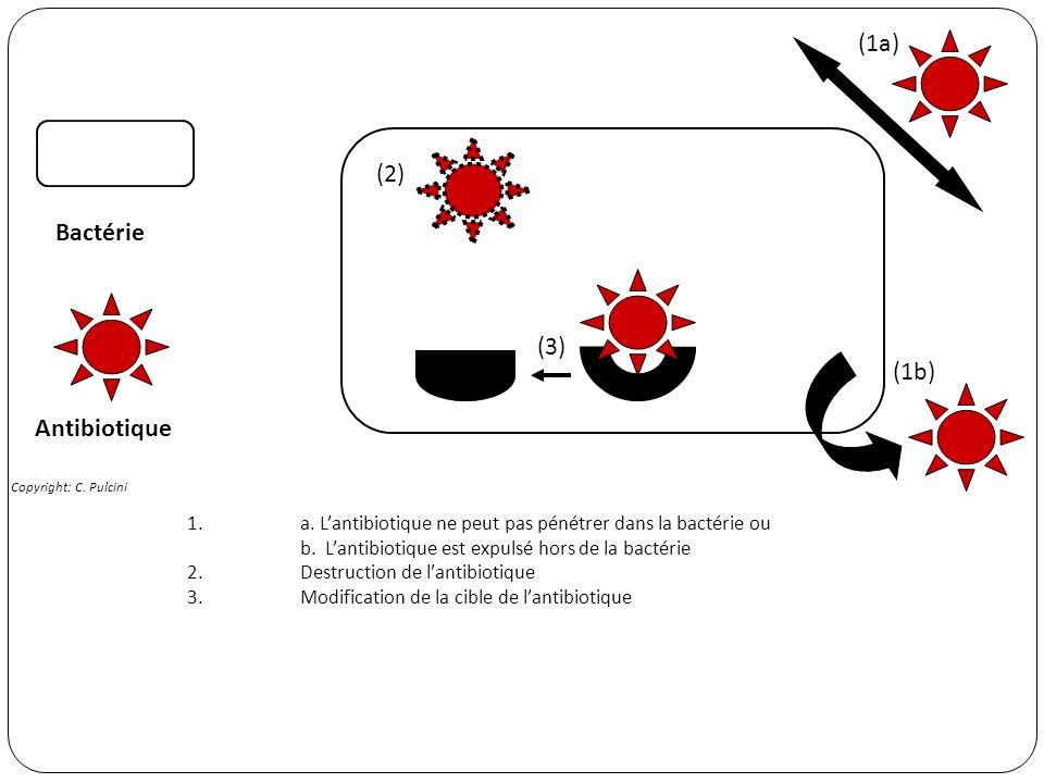1.a. Lantibiotique ne peut pas pénétrer dans la bactérie ou b. Lantibiotique est expulsé hors de la bactérie 2.Destruction de lantibiotique 3. Modific