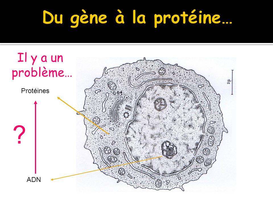 Il y a un problème… problème… Protéines ADN ?