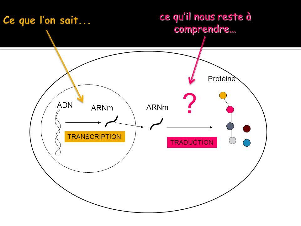 ADN ARNm TRANSCRIPTION ARNm Protéine TRADUCTION ? ce quil nous reste à comprendre…