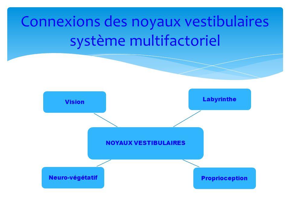 Connexions des noyaux vestibulaires système multifactoriel NOYAUX VESTIBULAIRES LabyrintheProprioceptionNeuro-végétatifVision