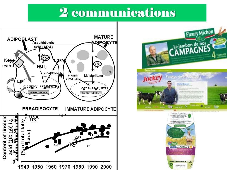 MATURE ADIPOCYTE IMMATURE ADIPOCYTE C/EBPaPPARg/RXRa e-FABP/ a-FABP/aP2 TARGET GENES ARA Metabolite(s) LO Xs TG TARGET GENES C/EBPb/d PPARd/RXRa ARA P