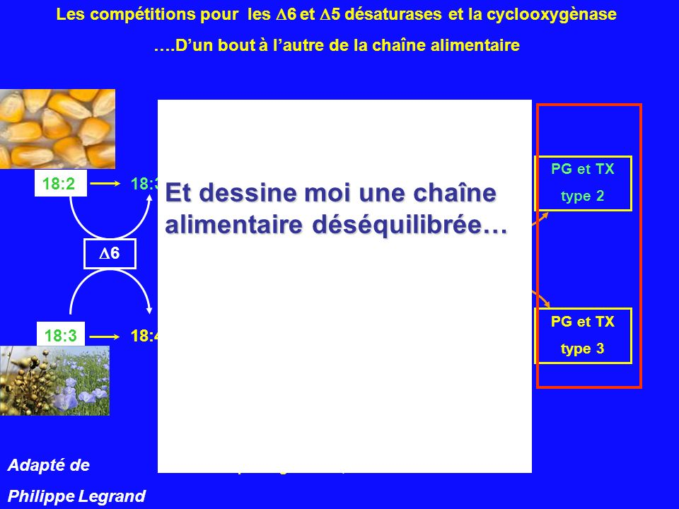 PG : prostaglandines; TX : thromboxanes 22:4 22:5 18:3 18:4 20:3 20:4 20:5 22:5 22:6 n- 6 n - 3 18:2 18:3 5 cyclooxygènase PG et TX type 2 PG et TX ty