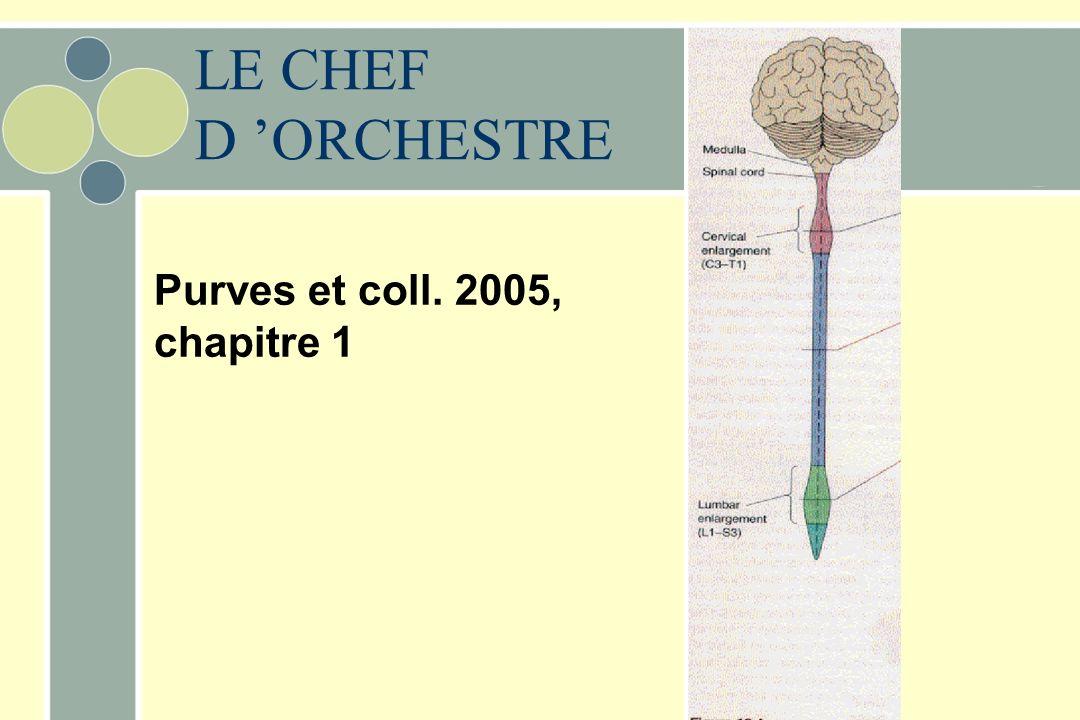 LE CHEF D ORCHESTRE Purves et coll. 2005, chapitre 1