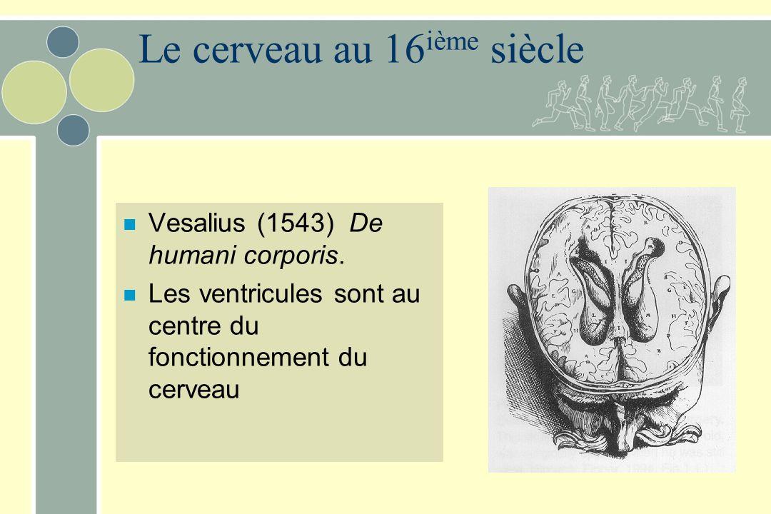 Le cerveau au 16 ième siècle n Vesalius (1543) De humani corporis. n Les ventricules sont au centre du fonctionnement du cerveau