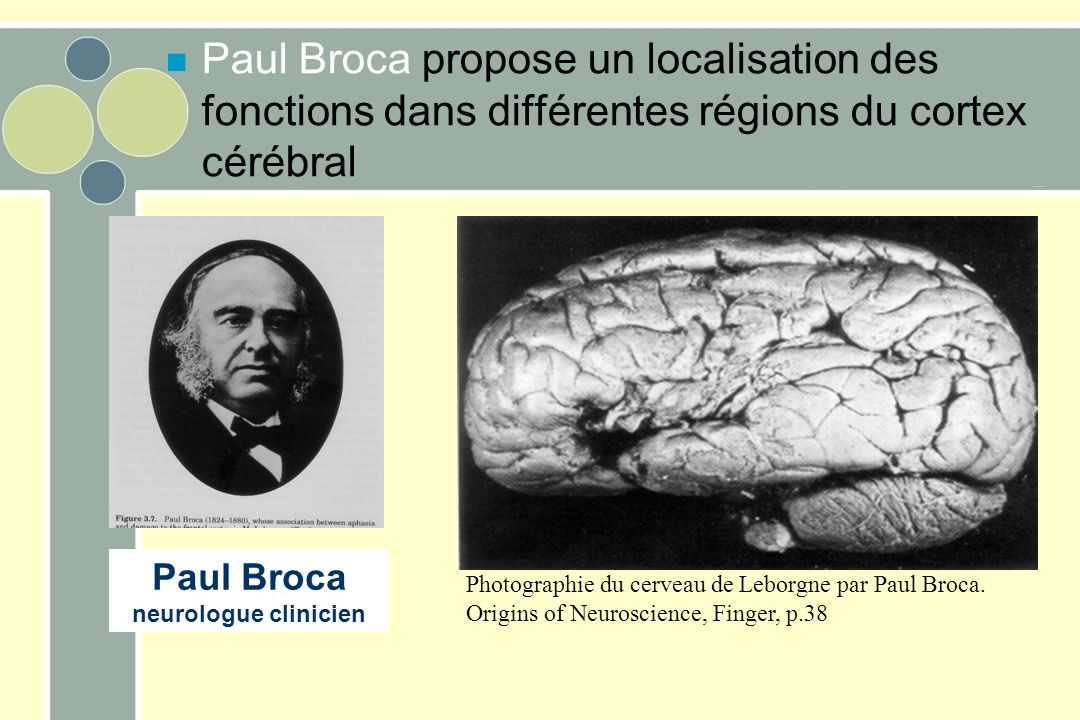 Photographie du cerveau de Leborgne par Paul Broca. Origins of Neuroscience, Finger, p.38 Paul Broca neurologue clinicien n Paul Broca propose un loca