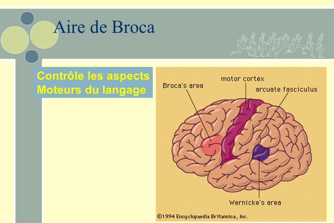 Aire de Broca Contrôle les aspects Moteurs du langage