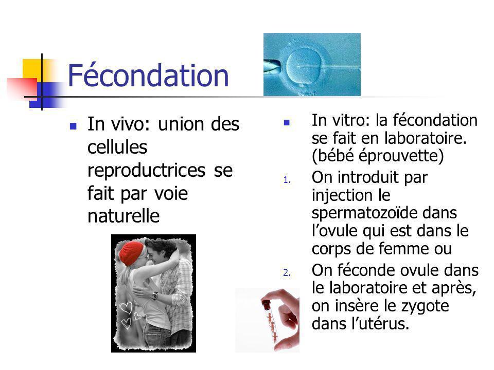 Fécondation In vivo: union des cellules reproductrices se fait par voie naturelle In vitro: la fécondation se fait en laboratoire. (bébé éprouvette) 1