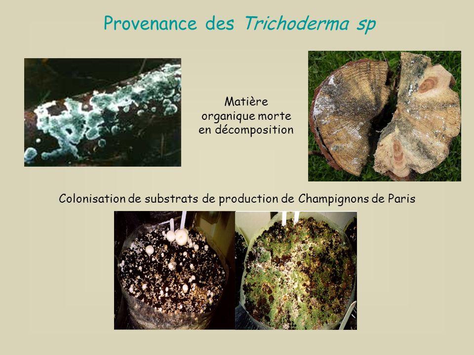 Développement de plusieurs générations de produits : 1° génération : LES PRODUITS DE FOND 1° génération : LES PRODUITS DE FOND Formules organiques fav
