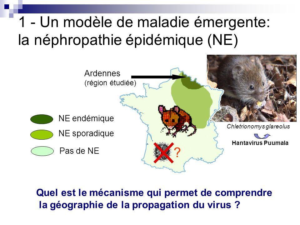 1 - Un modèle de maladie émergente: la néphropathie épidémique (NE) Ardennes (région étudiée) NE sporadique Pas de NE NE endémique ? Quel est le mécan