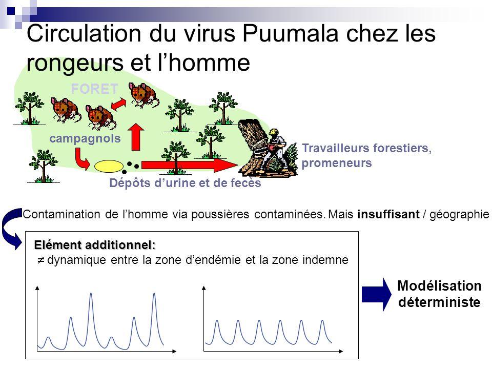 Circulation du virus Puumala chez les rongeurs et lhomme campagnols Dépôts durine et de fecès Travailleurs forestiers, promeneurs FORET Contamination