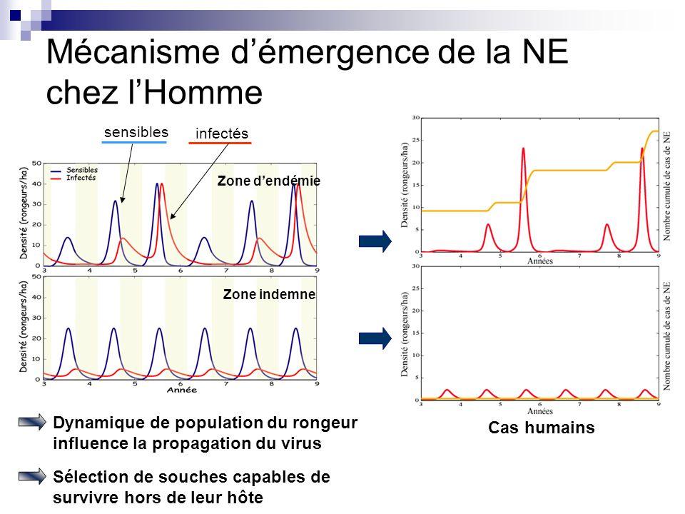 Mécanisme démergence de la NE chez lHomme sensibles Cas humains Zone dendémie Zone indemne Dynamique de population du rongeur influence la propagation