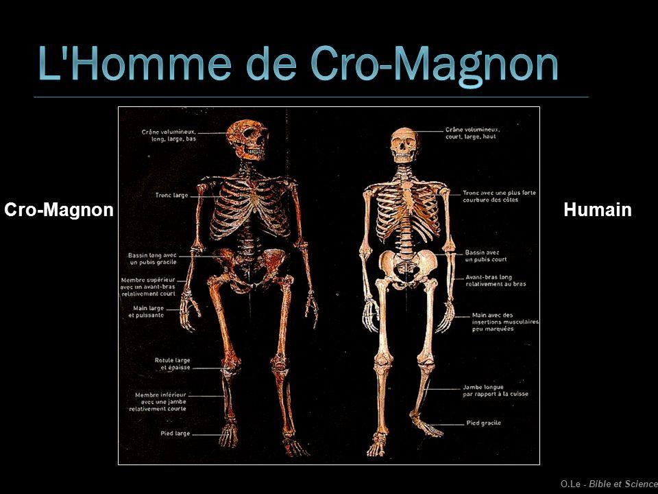 Cro-MagnonHumain