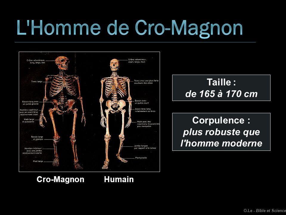 O.Le - Bible et Science Cro-MagnonHumain Taille : de 165 à 170 cm Corpulence : plus robuste que l'homme moderne