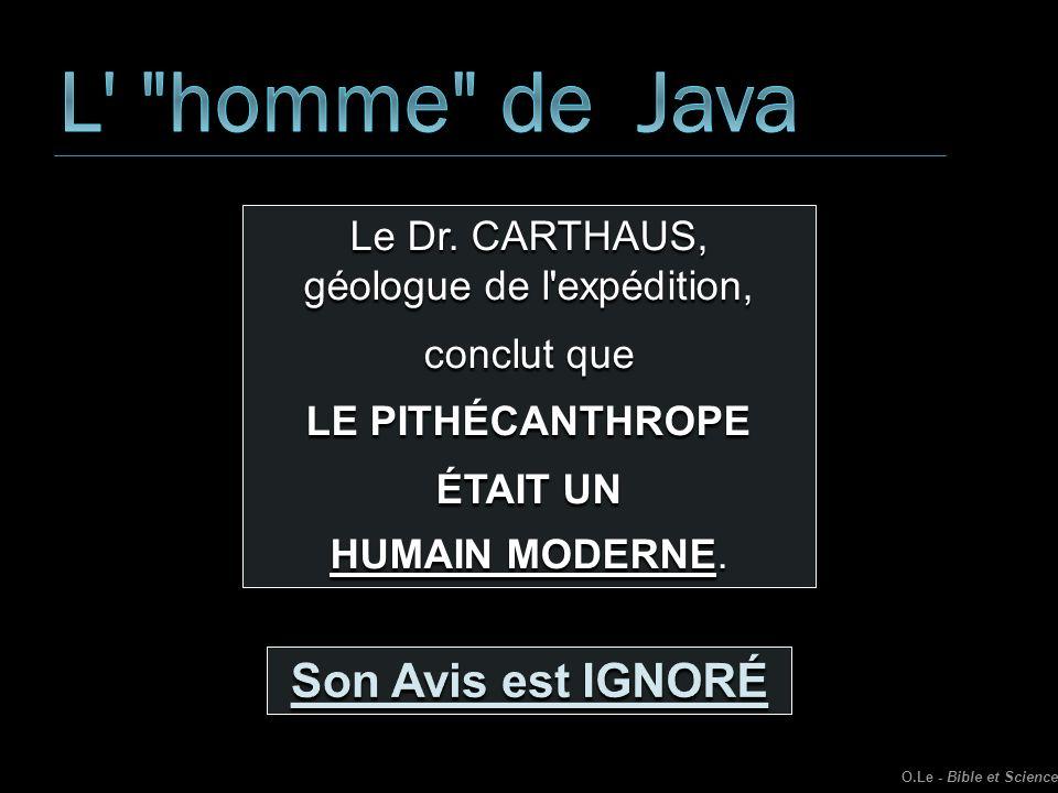 Le Dr. CARTHAUS, géologue de l'expédition, conclut que LE PITHÉCANTHROPE ÉTAIT UN HUMAIN MODERNE. O.Le - Bible et Science