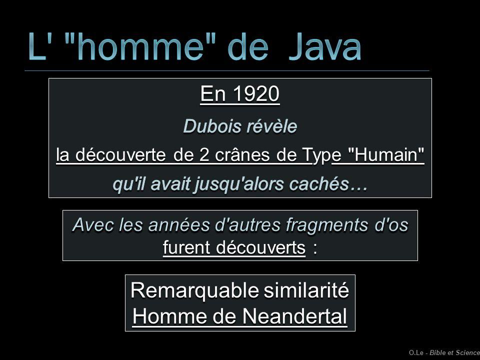 Remarquable similarité Homme de Neandertal O.Le - Bible et Science