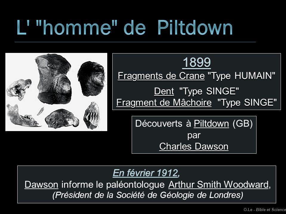 Découverts à Piltdown (GB)par Charles Dawson O.Le - Bible et Science