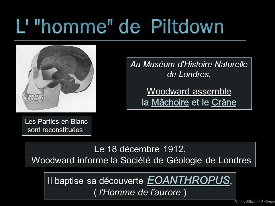Les Parties en Blanc sont reconstituées Le 18 décembre 1912, Woodward informe la Société de Géologie de Londres Woodward informe la Société de Géologi