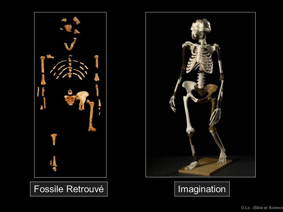Imagination Fossile Retrouvé O.Le - Bible et Science