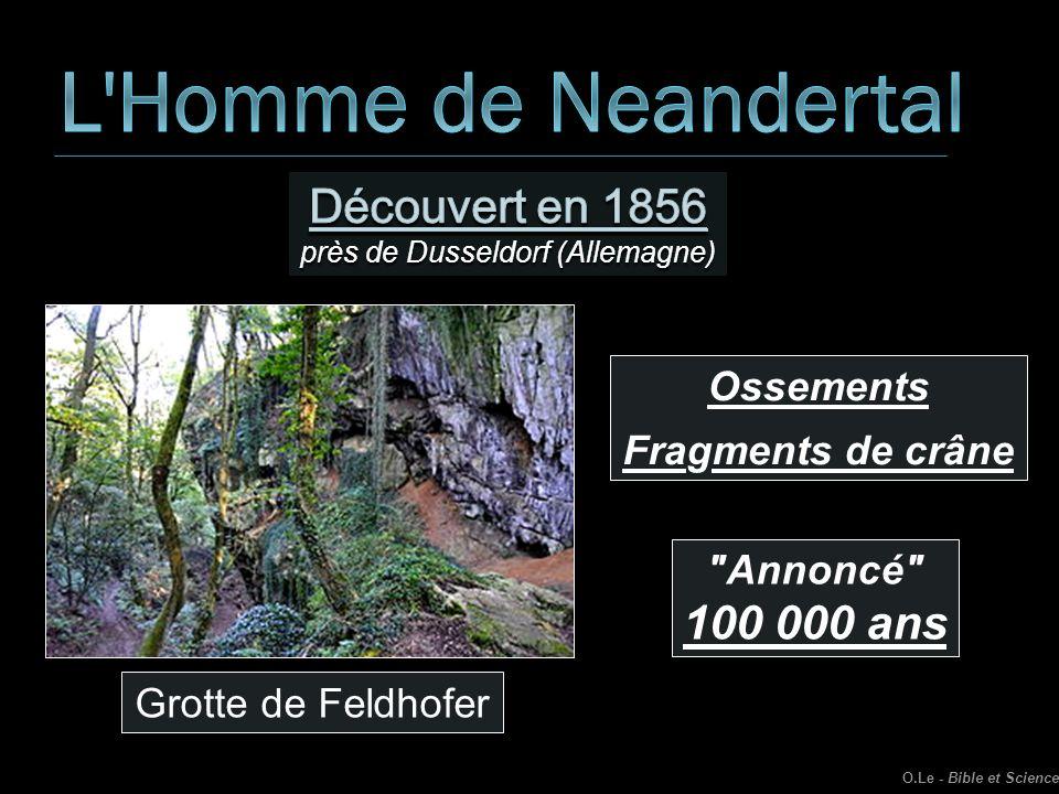 Grotte de Feldhofer Ossements Fragments de crâne