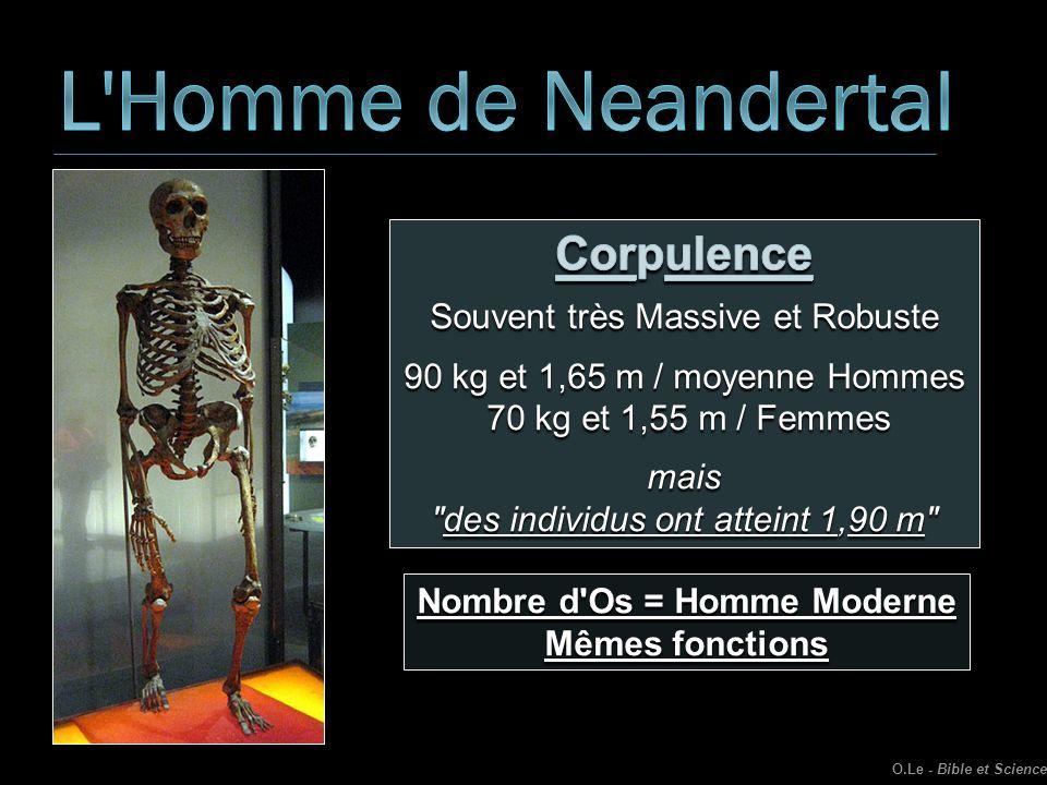 Nombre d'Os = Homme Moderne Mêmes fonctions O.Le - Bible et Science