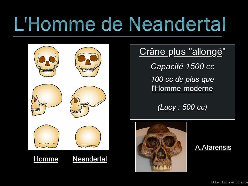 Crâne plus