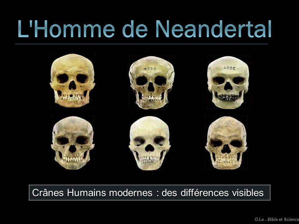 O.Le - Bible et Science Crânes Humains modernes : des différences visibles