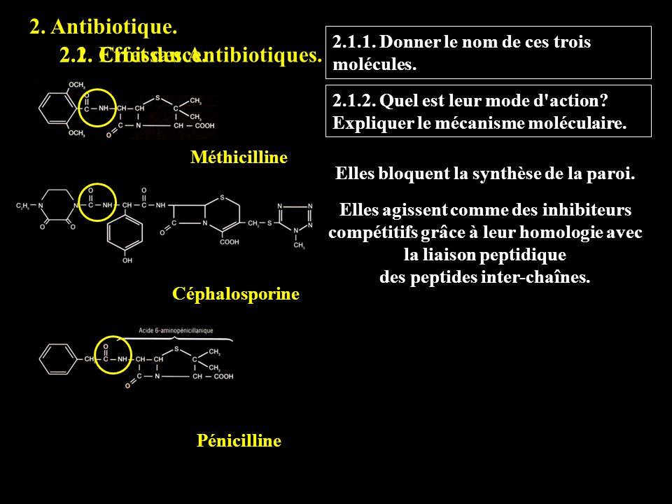 2. Antibiotique. 2.1. Effet des Antibiotiques. 2.1.1. Donner le nom de ces trois molécules. 2.2. Croissance. Céphalosporine Méthicilline Pénicilline 2