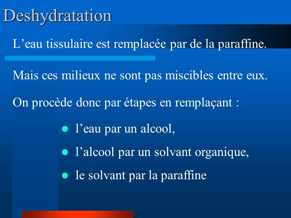 Deshydratation Leau tissulaire est remplacée par de la paraffine. Mais ces milieux ne sont pas miscibles entre eux. On procède donc par étapes en remp