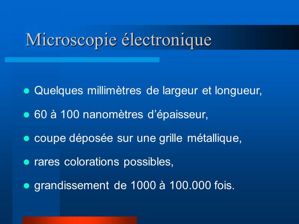 Microscopie électronique Quelques millimètres de largeur et longueur, 60 à 100 nanomètres dépaisseur, coupe déposée sur une grille métallique, rares c