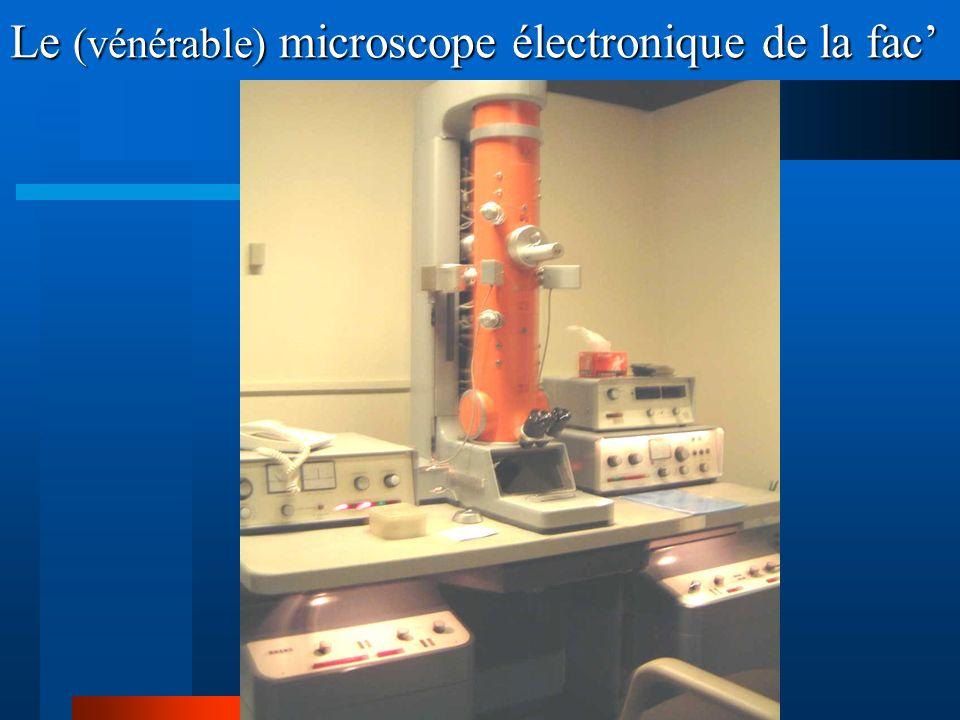 Le (vénérable) microscope électronique de la fac
