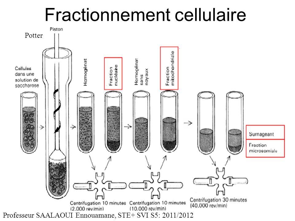 Fractionnement cellulaire Professeur SAALAOUI Ennouamane, STE+ SVI S5: 2011/2012 Potter