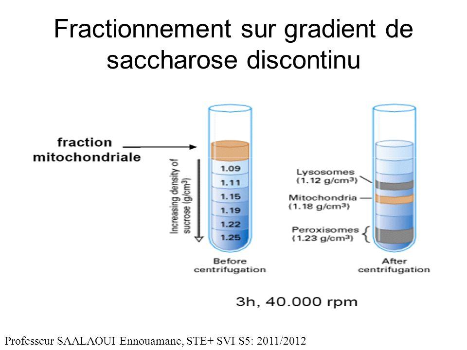 Fractionnement sur gradient de saccharose discontinu Professeur SAALAOUI Ennouamane, STE+ SVI S5: 2011/2012