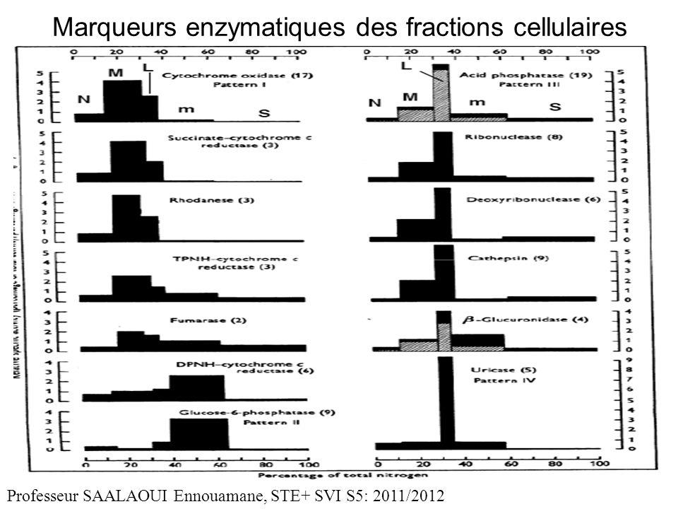 Marqueurs enzymatiques des fractions cellulaires Professeur SAALAOUI Ennouamane, STE+ SVI S5: 2011/2012