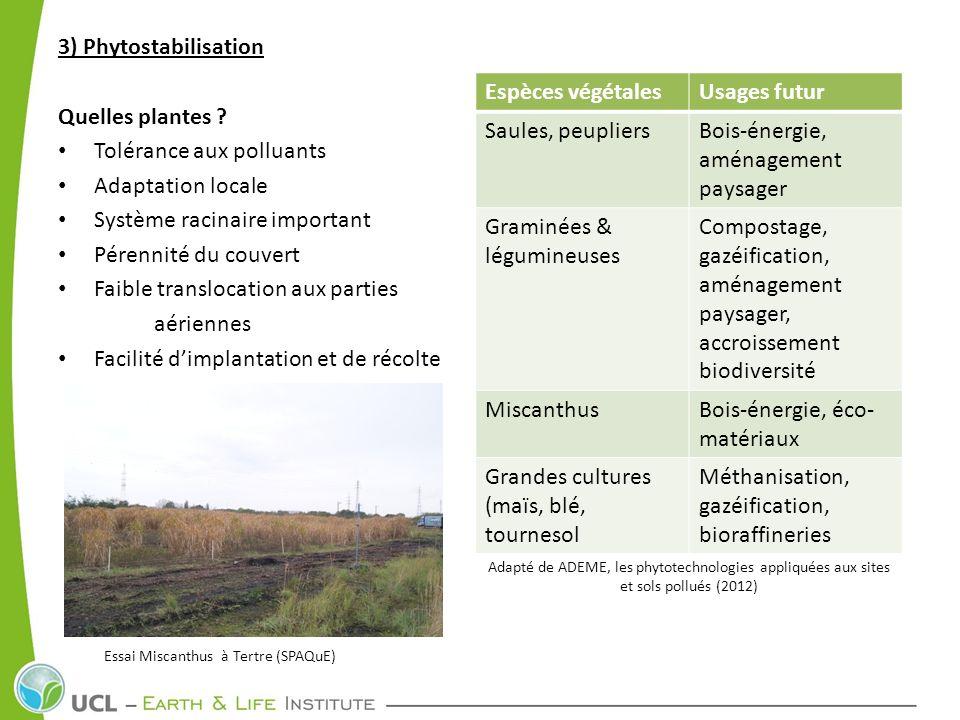 3) Phytostabilisation Quelles plantes ? Tolérance aux polluants Adaptation locale Système racinaire important Pérennité du couvert Faible translocatio