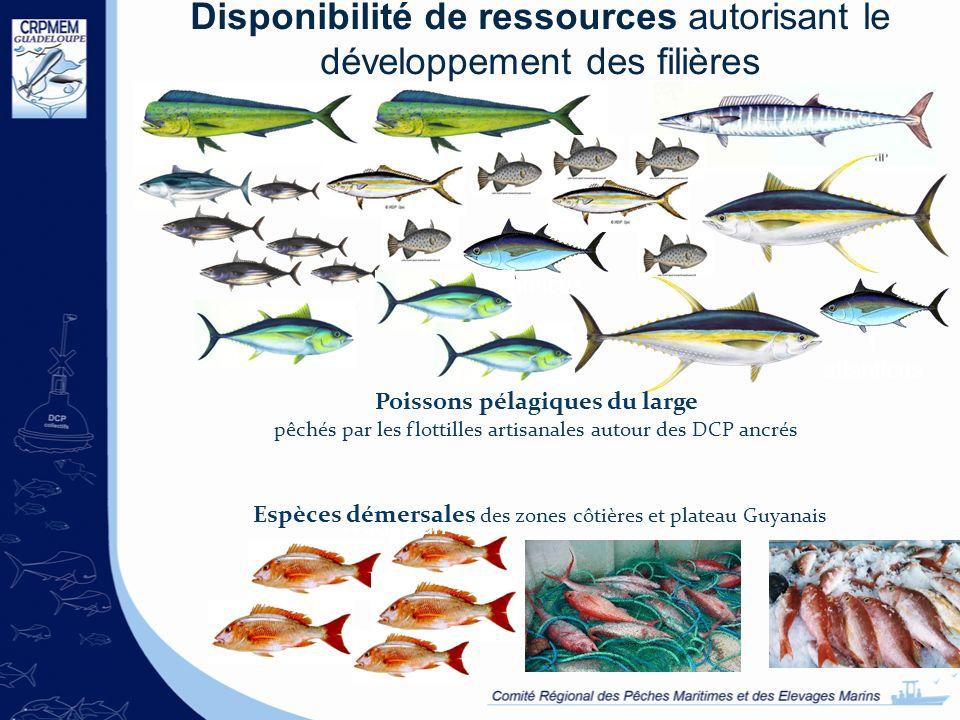 Disponibilité de ressources autorisant le développement des filières A solandri T atlanticus Poissons pélagiques du large pêchés par les flottilles ar