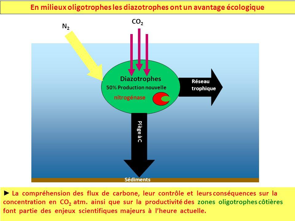 En milieux oligotrophes les diazotrophes ont un avantage écologique La compréhension des flux de carbone, leur contrôle et leurs conséquences sur la concentration en CO 2 atm.