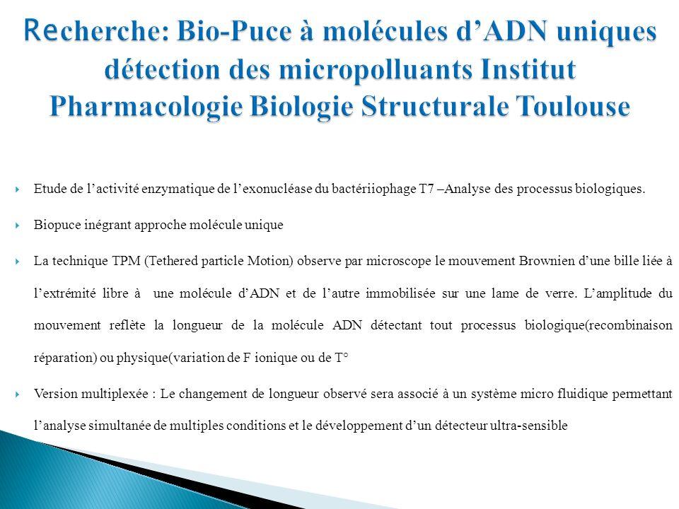 Etude de lactivité enzymatique de lexonucléase du bactériiophage T7 –Analyse des processus biologiques.