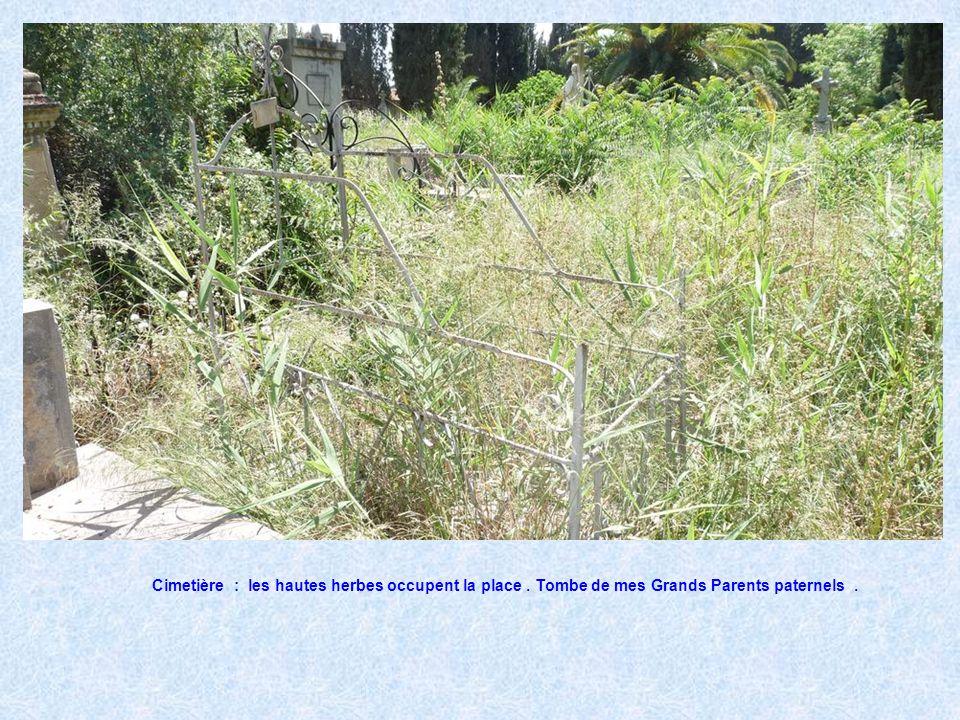 Cimetière : les hautes herbes occupent la place.