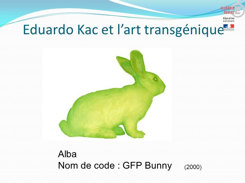 Eduardo Kac et lart transgénique Alba Nom de code : GFP Bunny (2000)