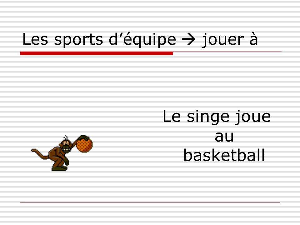 Les sports déquipe jouer à Le singe joue au basketball