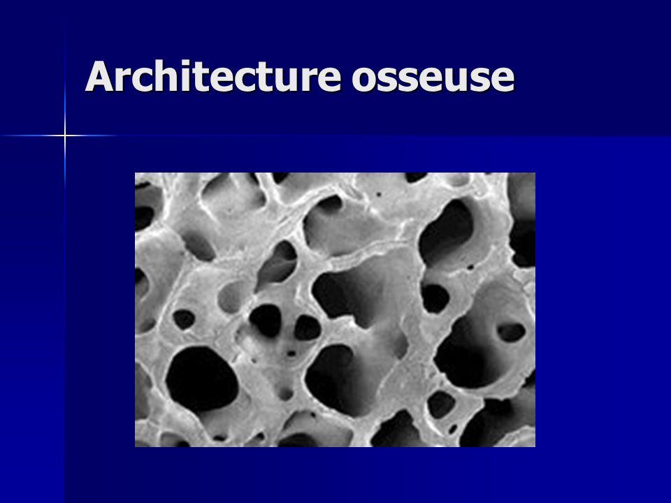 Architecture osseuse