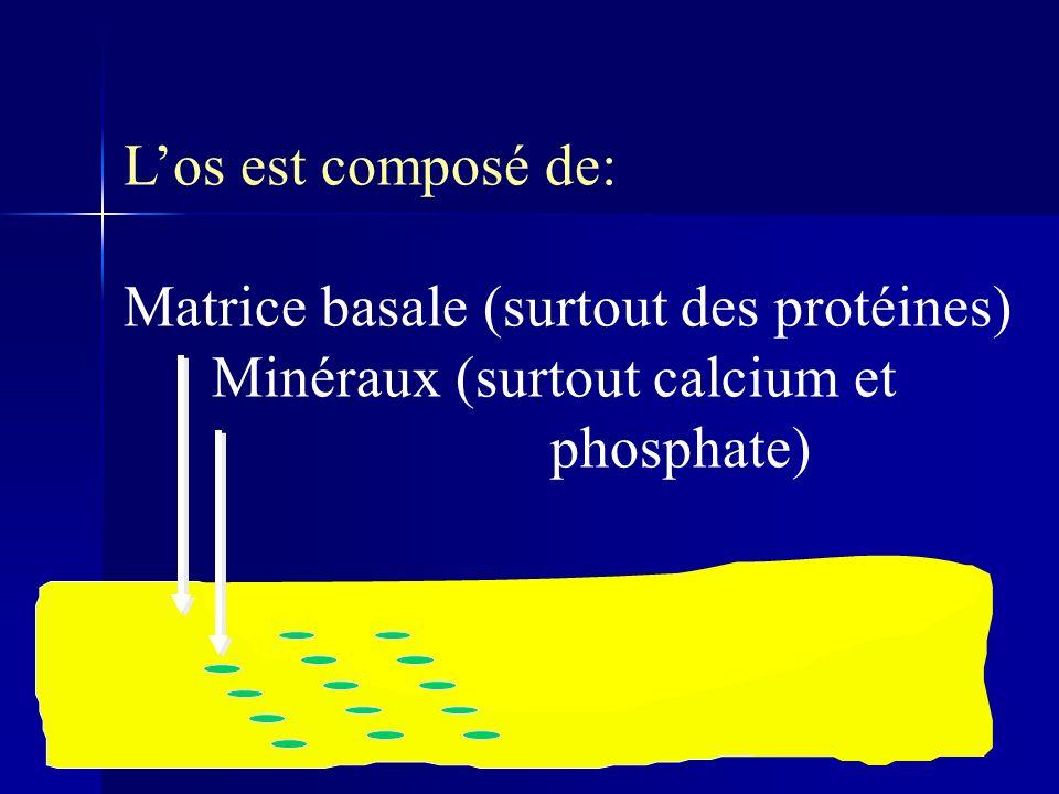 Los est composé de: Matrice basale (surtout des protéines) Minéraux (surtout calcium et phosphate)