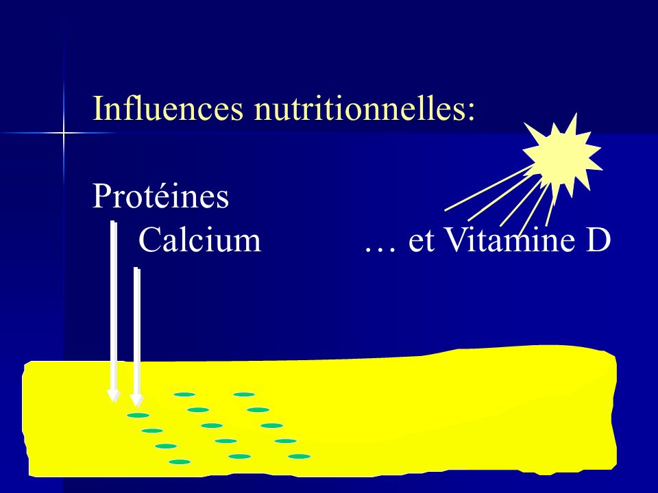 Influences nutritionnelles: Protéines Calcium … et Vitamine D
